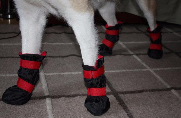Нужна ли собаке обувь зимой