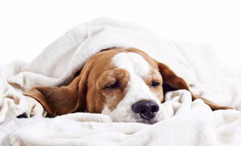 Имаверол для собак