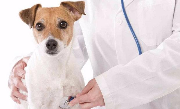 Бактериальное восполение на локтевых суставах у собаки рецепты народных целителей болезни суставов на ногах остеопороз