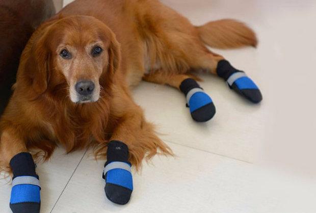 Нужна ли обувь маленьким собачкам