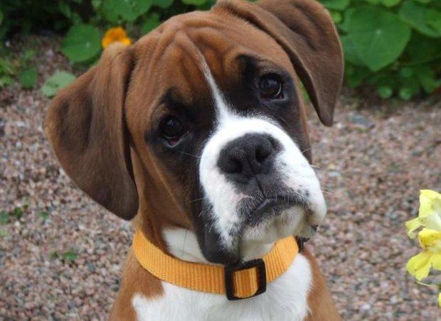 суспензия от глистов для собак дирофен цена