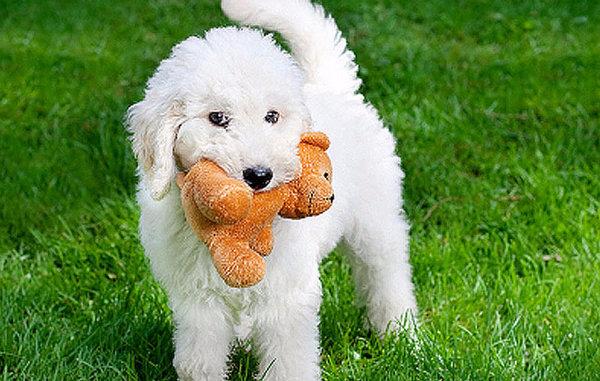 Ориджинал дрессировка собак