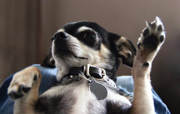 есть ли у собак аллергия
