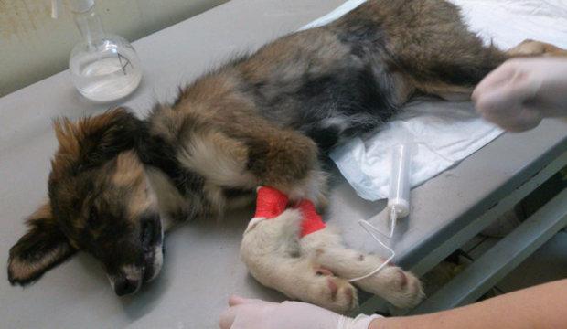 Гастрит у собак: симптомы и лечение, признаки, диета и
