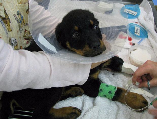 энтероколит у собак симптомы и лечение основе полипропилена