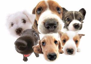 Выбираем безопасного питомца: гипоаллергенные породы собак