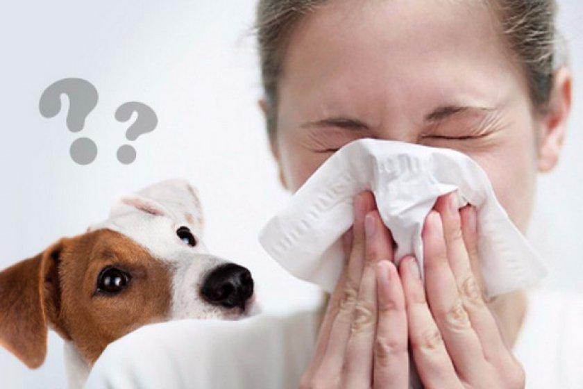 Какие собаки предпочтительней и аллергенные факторы