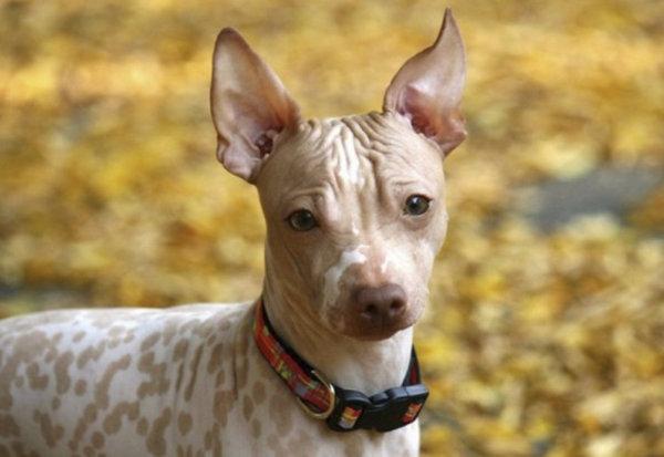 аллергия на собаку что делать форум