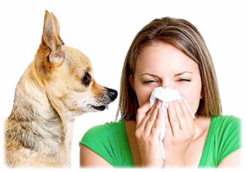 Что делать, если возникла аллергия на собаку