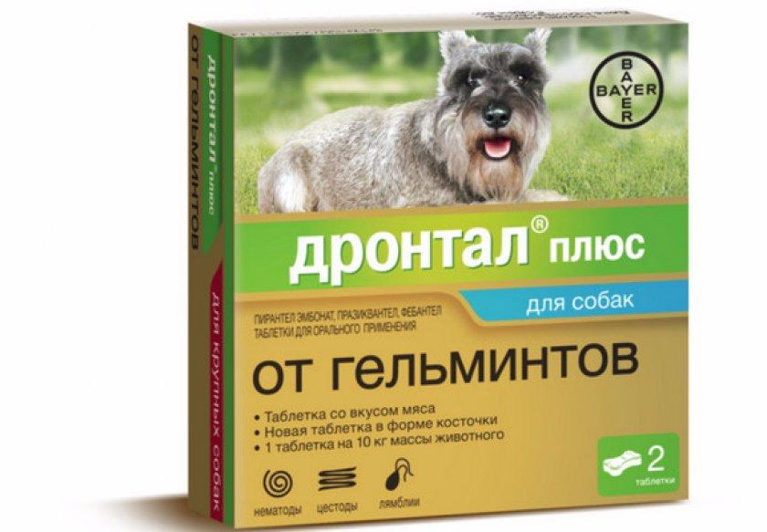 «Дронтал» от гельминтов: как давать собаке