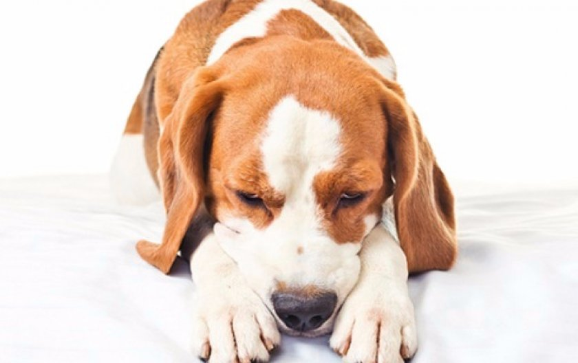 Показания для собак