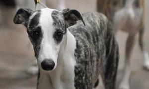 Почему появляется и как лечить кровотечение из матки у собак