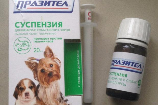 какие таблетки давать котам от аллергии