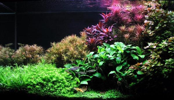 Трава для аквариума быстрорастущая