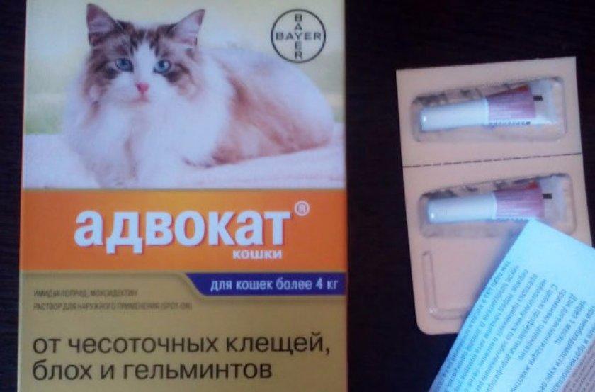Адвокат для кошек