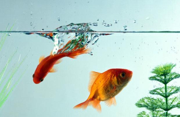 Требования к аквариумной воде