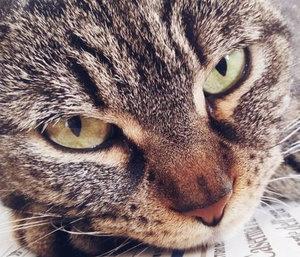 кастрация кота при коронавирусе