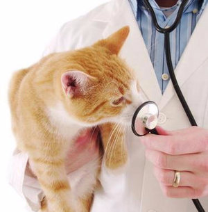 Токсоплазмоз у кошек