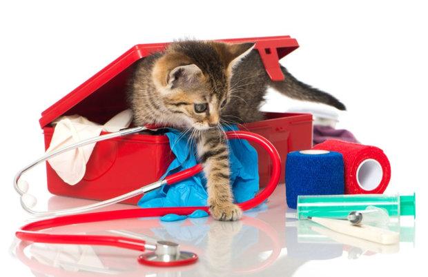 Римадил для кошек: инструкция по применению и отзывы о препарате.