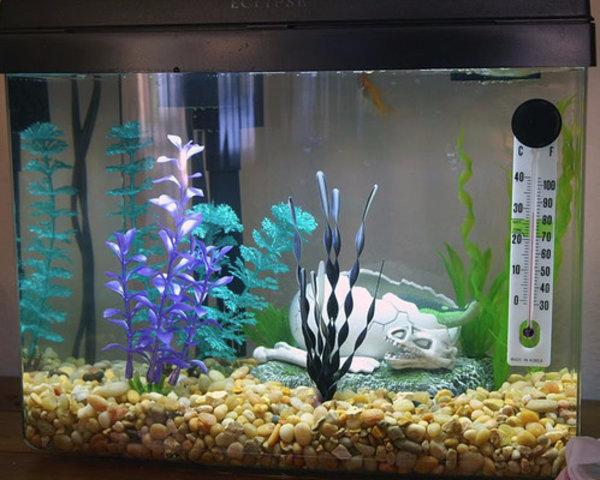 Выбираем грунт для аквариума