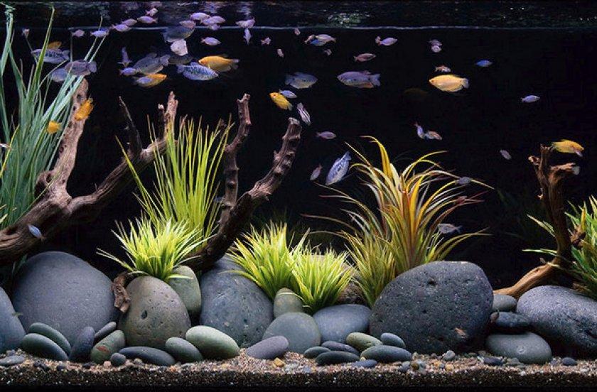 Выбираем лучший грунт для аквариума
