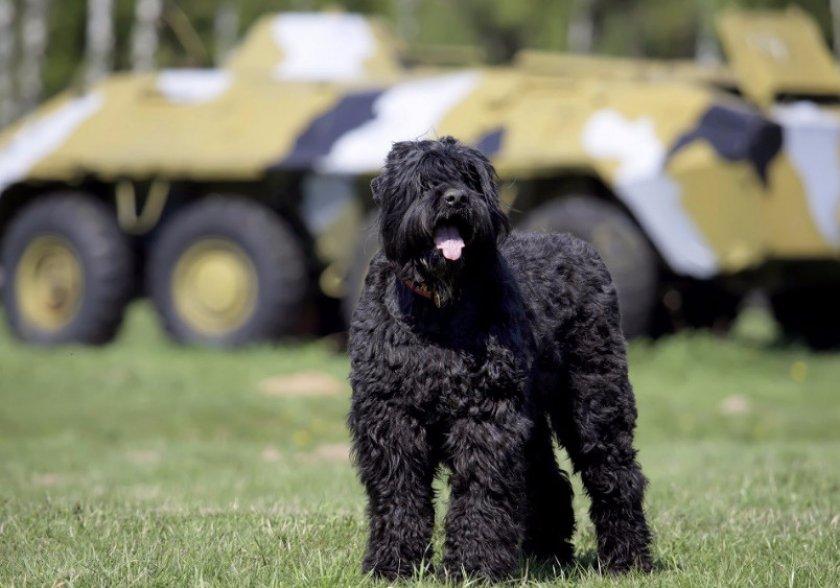 Собака Сталина