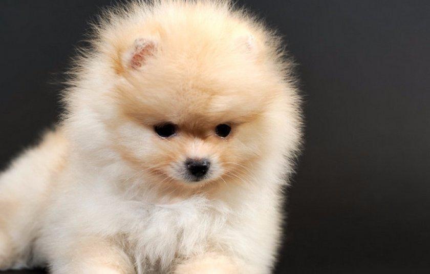 фото собак которые не растут маленькие