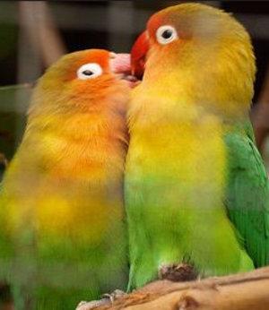 Сколько живут попугаи 9