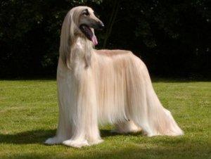 породы собак русские