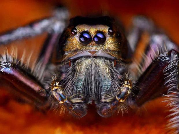 чем питаются тарантулы в домашних условиях
