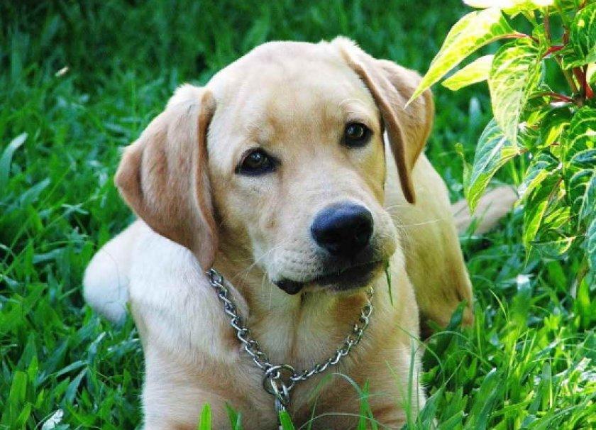 анализ на носительство коронавируса у собак