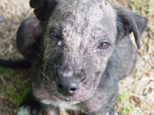 Кожные заболевания у собак - обзор