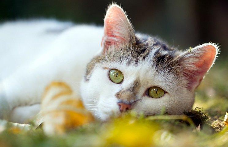 Симптомы нарушения здоровья кошки