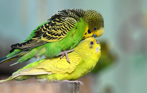 Сколько лет живут различные птицы в том числе вороны и попугаи 67