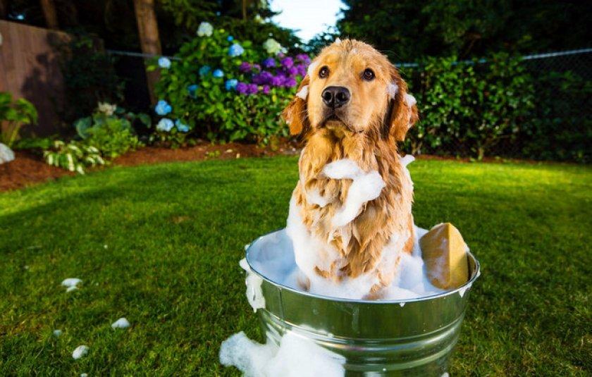 Власоеды у собак: симптомы, лечение, профилактика   Ветеринарная ...   535x840