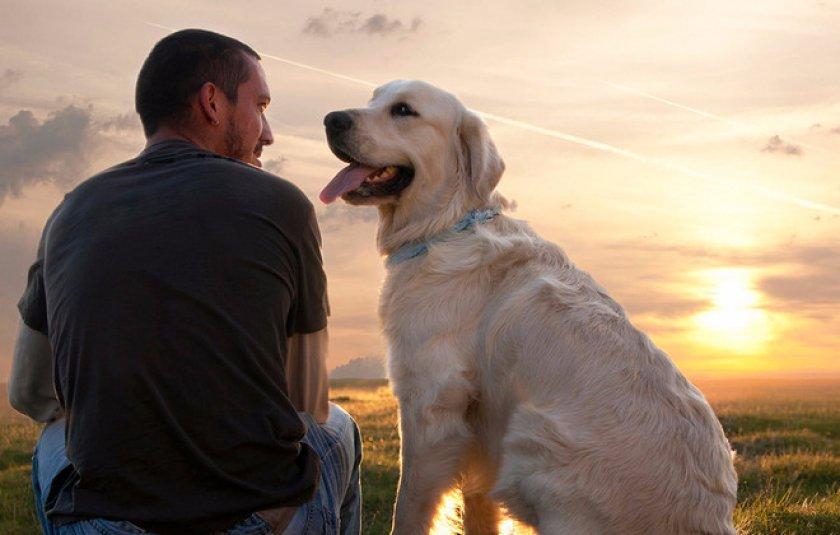 Власоеды у собак: симптомы и лечение, профилактика   535x840