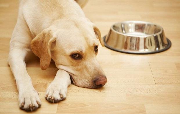 лечение хронического панкреатита у собак