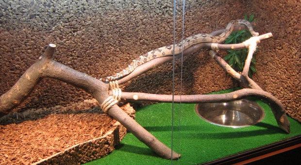 Как сделать домашнего змея 31