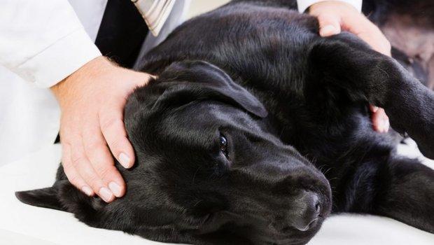 """Результат пошуку зображень за запитом """"Собака – эпилептик. Что делать?"""""""