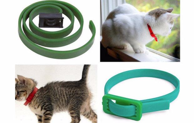 Блохи у кошек: откуда берутся, как обнаружить, чем вывести