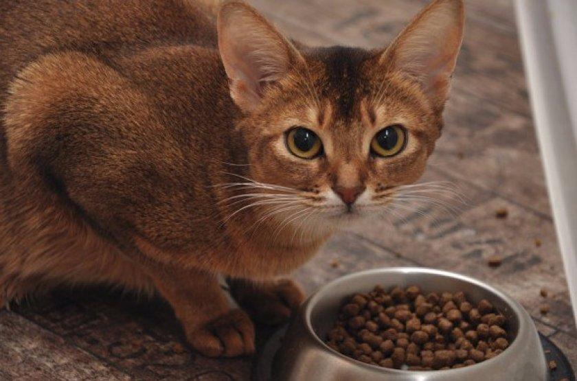 Можно ли вылечить больную кошку