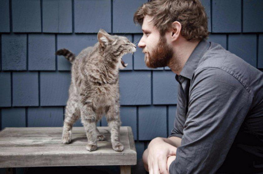 Может ли заразиться человек от кошки