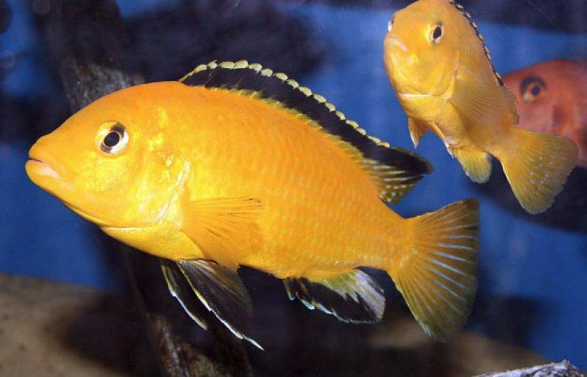 Отличие самца от самки и размножение
