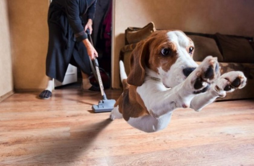 Уборка после собаки