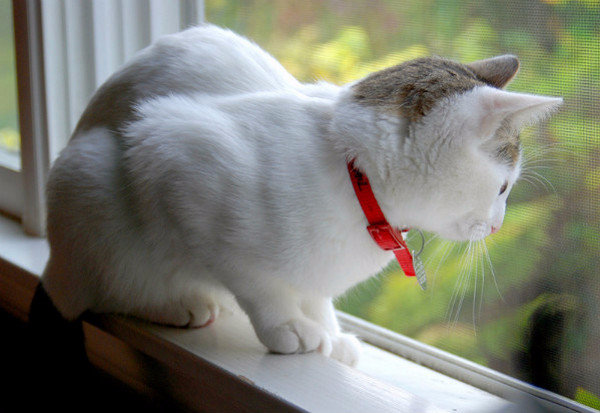 Как действует ошейник от блох для кошек и безопасен ли он