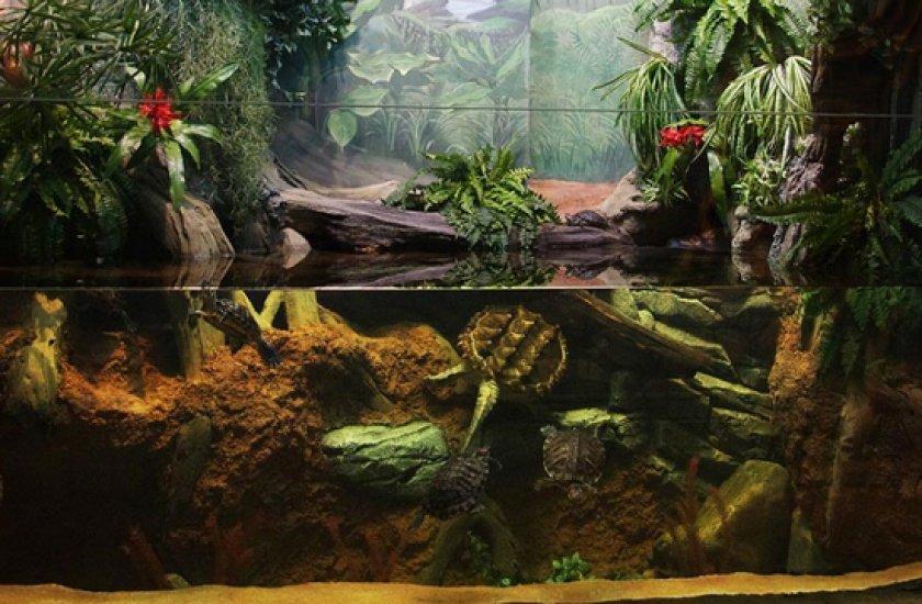 акватеррариуме