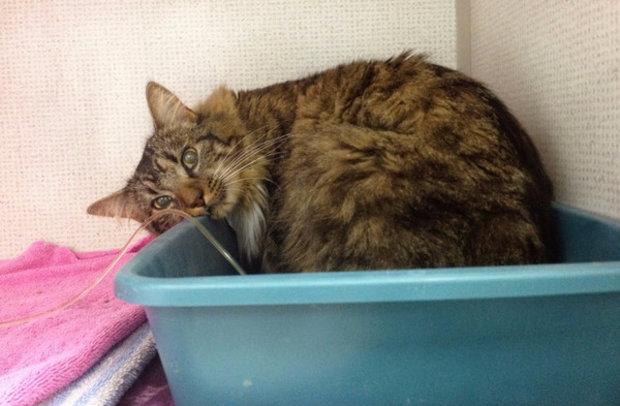 как облегчить состояние кошки при хпн