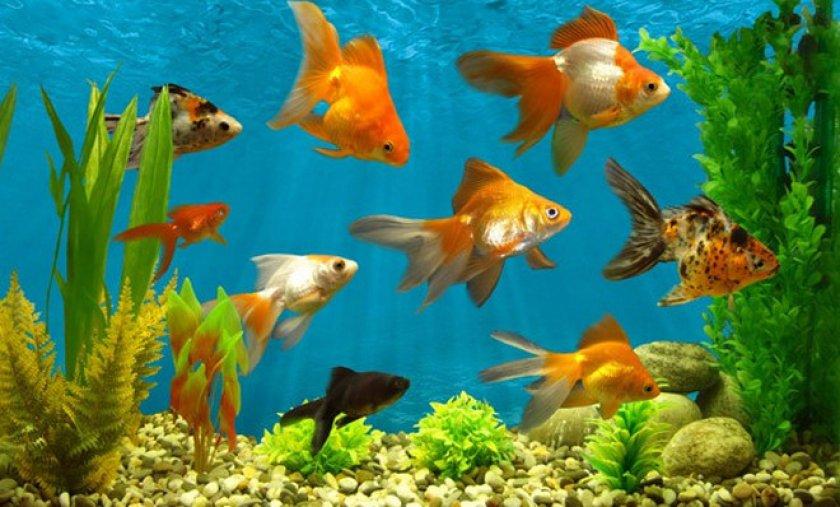оп-10 лучших растений для аквариума