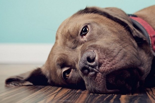 Помощь собаке при отравлении крысиным ядом