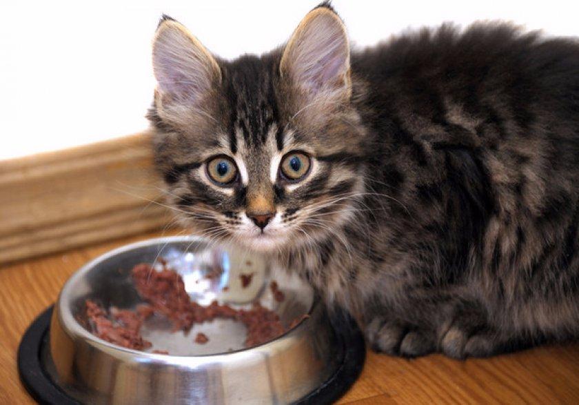 Сколько раз в день кормить кошку
